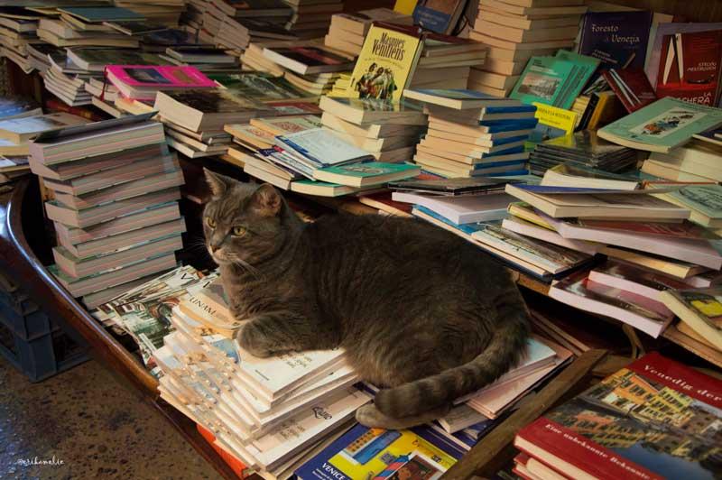 Gatto-Libreria-Acqua-Alta