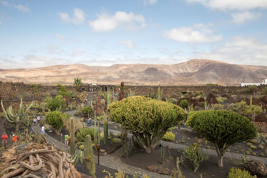 Jardin du Cactus di Lanzarote