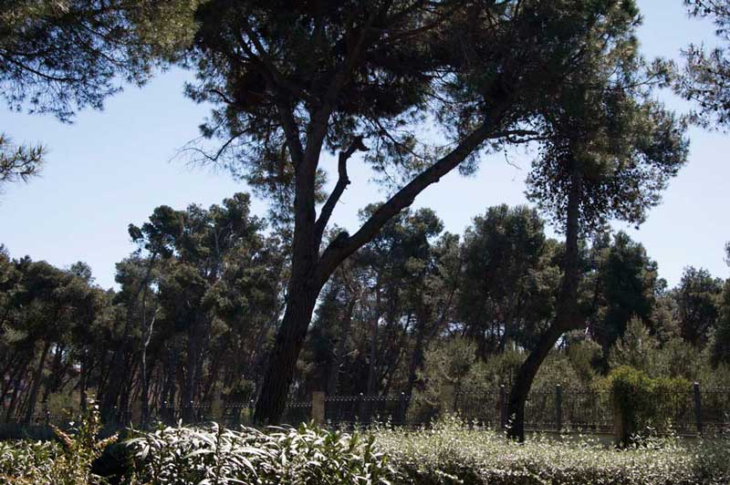 La pineta di Pescara