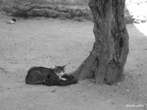 Un gatto incontrato nel Castello di Lisbona