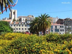 La cattedrale tra il giallo dei fiori