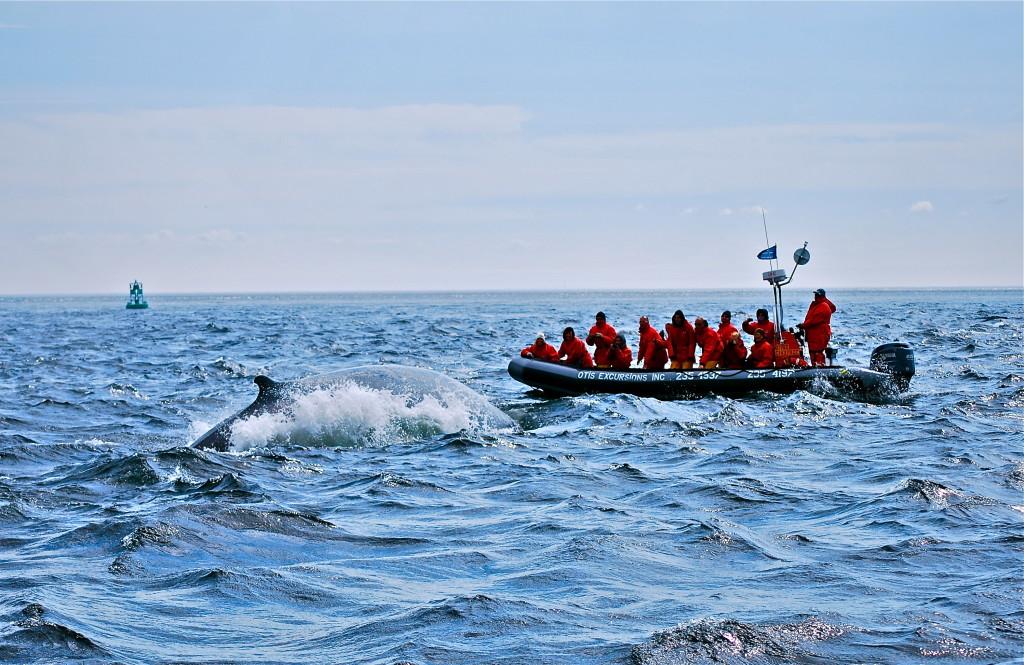 Tadoussac, avvistamento balene